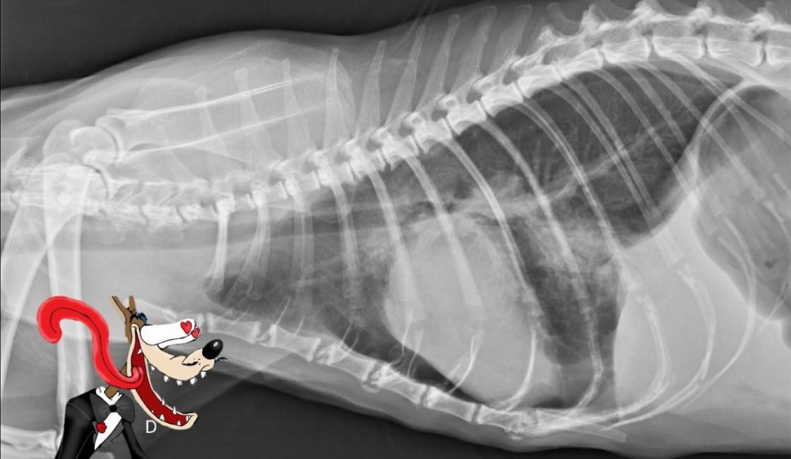 Inscription ouverte pour notre formation sur la radiographie du thorax !